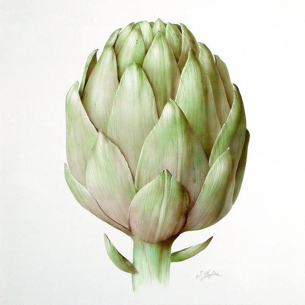 Artichoke<br />